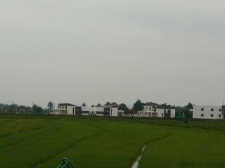 Pemandangan Homestay dari sawah padi